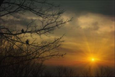 Doves-at-sunset