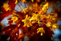 Yellow-and-red-srgb