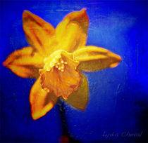 Plastic beauty von Lydia Cheval