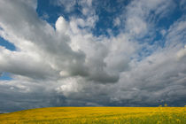 A storm is brewing over a Canola field in the Palouse near Moscow, Idaho State, USA von Wolfgang Kaehler