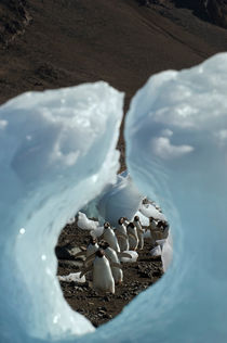 ANTARCTICA, ANTARCTIC PENINSULA, DEVIL ISLAND, ADELIE PENGUINS WALKING ON BEACH, VIEW THROUGH HOLE IN ICE PEBBLE von Wolfgang Kaehler