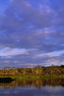 ECUADOR, AMAZON BASIN, RIO NAPO, RAINFOREST, LAKE, EVENING LIGHT von Wolfgang Kaehler
