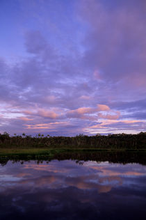 ECUADOR, AMAZON BASIN, RIO NAPO, RAINFOREST, LAKE, EVENING LIGHT by Wolfgang Kaehler