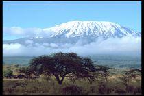 Kilimanjaro von Klaus Schäfer