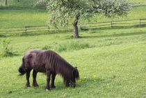 Pony allein auf der Koppel von Margarita Moerth