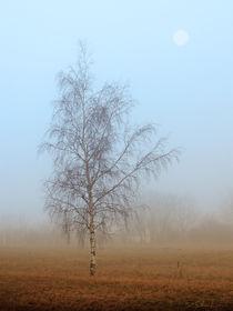 Nebel-Sonntag von Frank Schneidereit