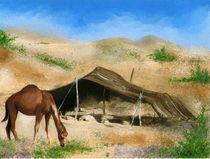Bedouin life by Soltane Hocine