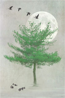 A-tree-in-the-moonlight