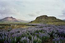 Borgarfjörður, Iceland by intothewide