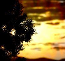 New Mexico Sunset von Mick Logan