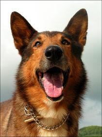 Smiling German Sheperd