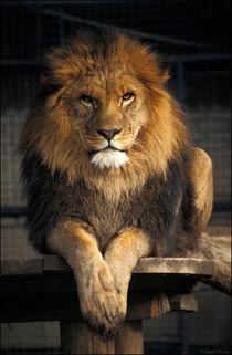 Lion King von Natasa Mozina