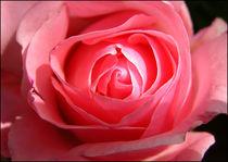 Rose von Natasa Mozina