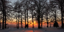 Winterlicher Wald am Abend von Rainer Rombach