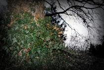 Ivy forest. by Nadezhda Petrova