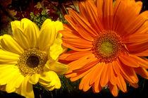 Yellow-and-orange