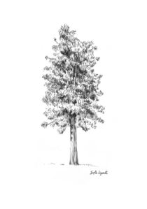 Drawing of a tree by Sofía Ugarte