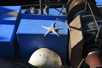 Starfish on a blue ship by Intensivelight Panorama-Edition