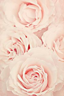 Roses by Diana Kraleva