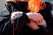 Portrait of a young man with pet ferret by Intensivelight Panorama-Edition