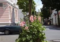 Lippstadt11