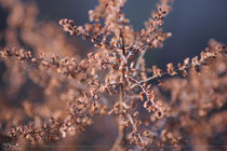 Artistic Nature by syoung-photography