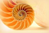 Nautilus von Kerstin Runge