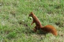 Eichhörnchen von Marina von Ketteler