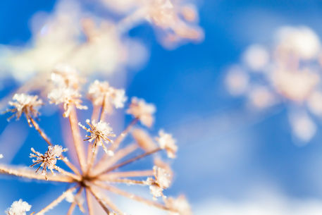 Plant-snow1