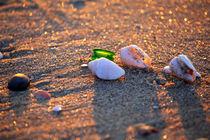 Seashells on Sunset  by Larisa Kroshkin