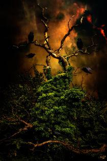 Crows Nest von Chris Lord