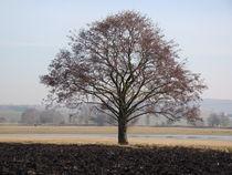 Baum von Ka Wegner