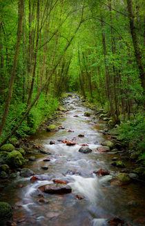 Creek in the forest von Marlene Ford