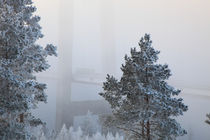 Bridge through foggy landscape by Intensivelight Panorama-Edition