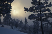 Wintersun by Intensivelight Panorama-Edition
