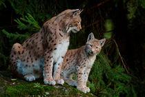 Lynx1004-3-4rm
