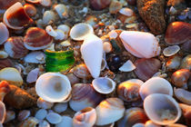 Seashells by Larisa Kroshkin