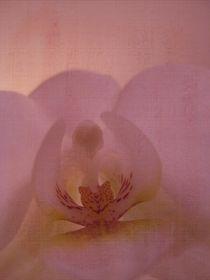 pink love von Amy Copp