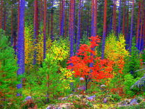 Fall colors by Pauli Hyvonen