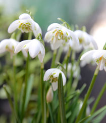 Der Frühling naht von Franziska Giga Maria