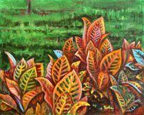 Crotons-4