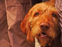 Dog by dizdetcpizainy