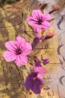 Blumen-aus-agypten