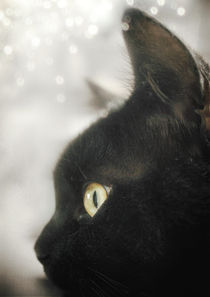 The Black Cat by Sybille Sterk