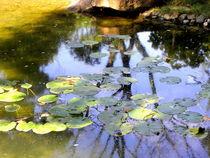 Water Lilies - Nymphaeaceae von bebra