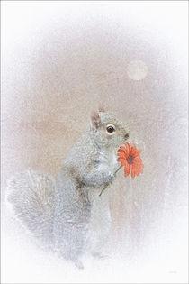 A-squirrel-in-love-4