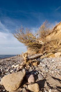 Steilküste Ahrenshoop von dresdner