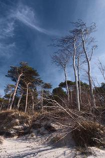 Weststrand by dresdner