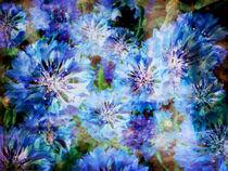 Kornblumen - bleuet von impression-florales