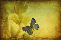 lis avec papillons von impression-florales